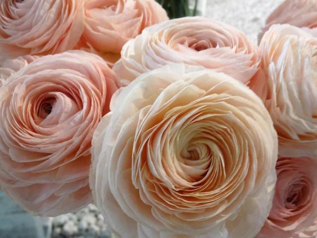 philadelphia-flower-show-1-c