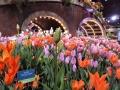 philadelphia-flower-show-container-garden-tulips-c