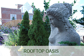 rooftop-oasis-image