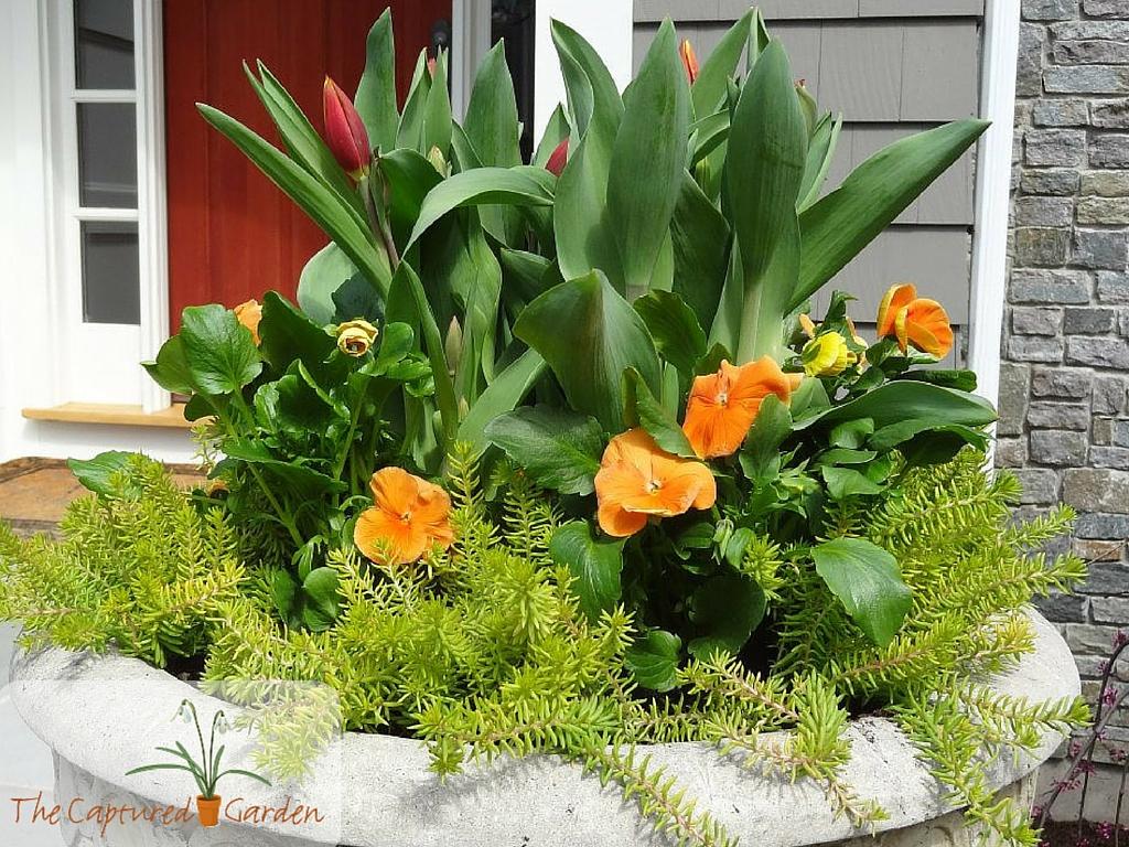 container-gardening-orange2