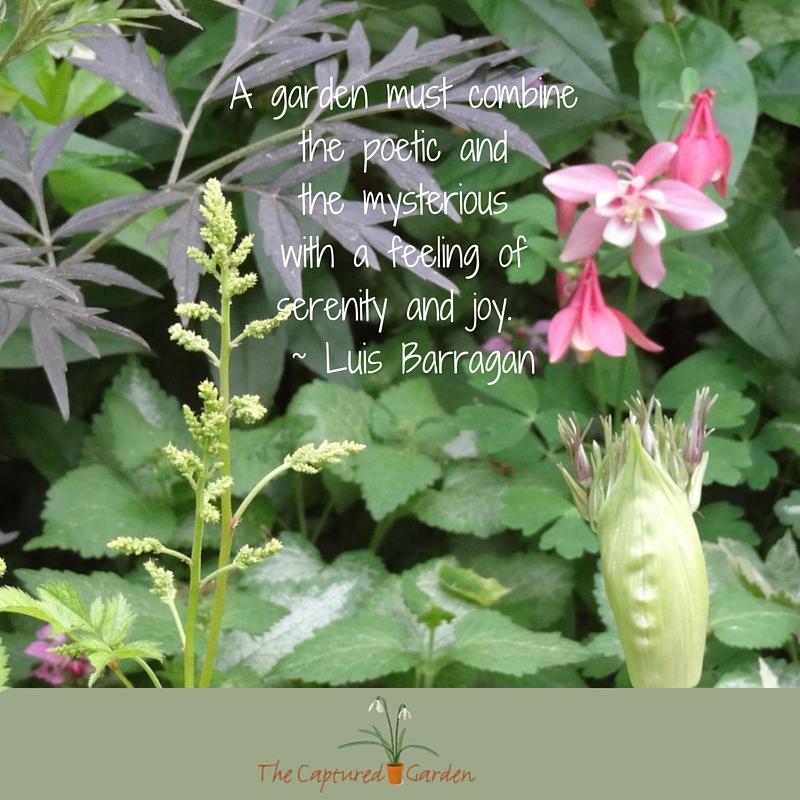 garden brings serenity and joy