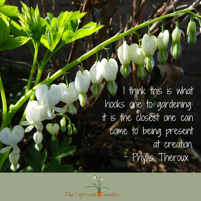 """I think this is what hooks one to gardening: it is the closest one can come to being present at creation."" - Phyllis Theroux"
