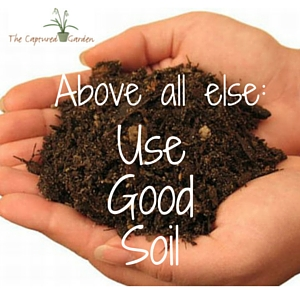 above all else, use good soil, container garden tips