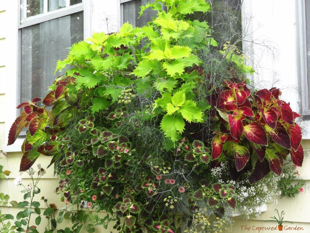 best interesting plant for shade gardens