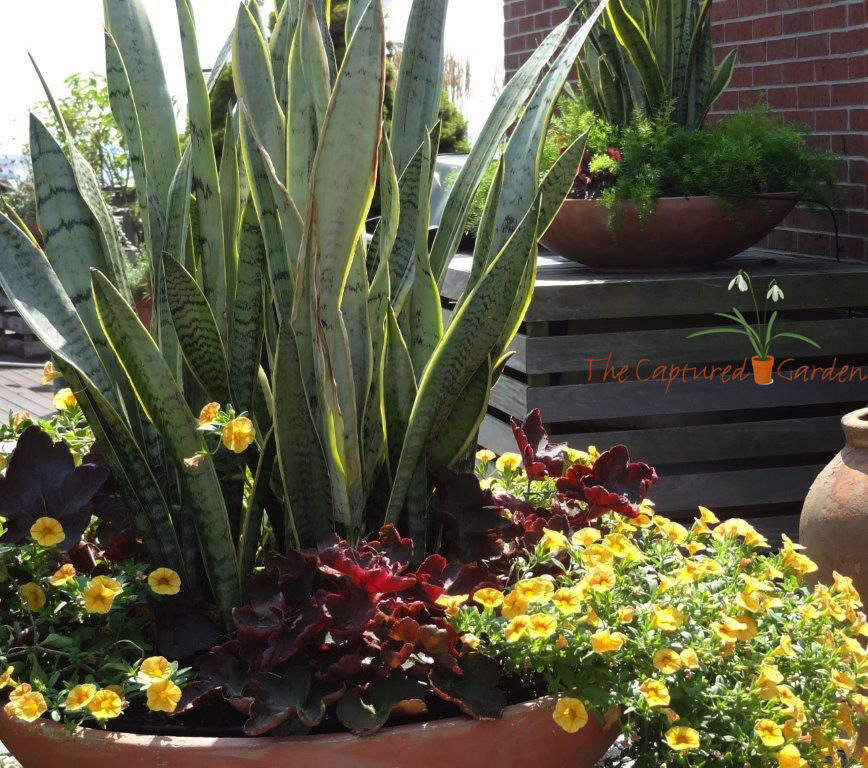 container garden - patio garden - garden design