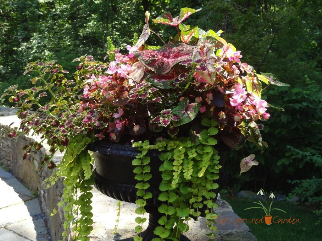 patio-container-garden-912