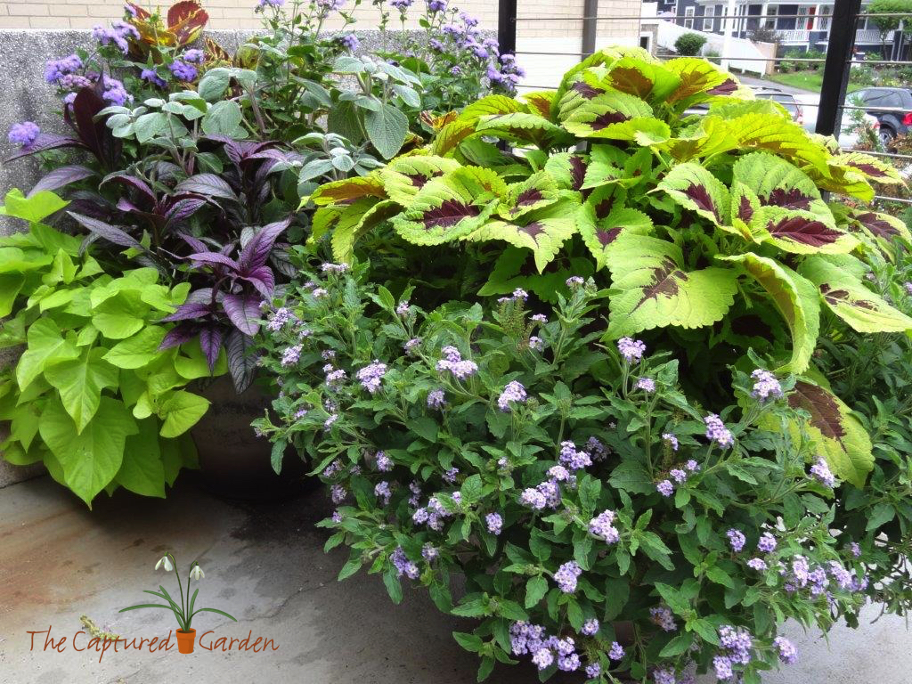 patio-container-garden-summer