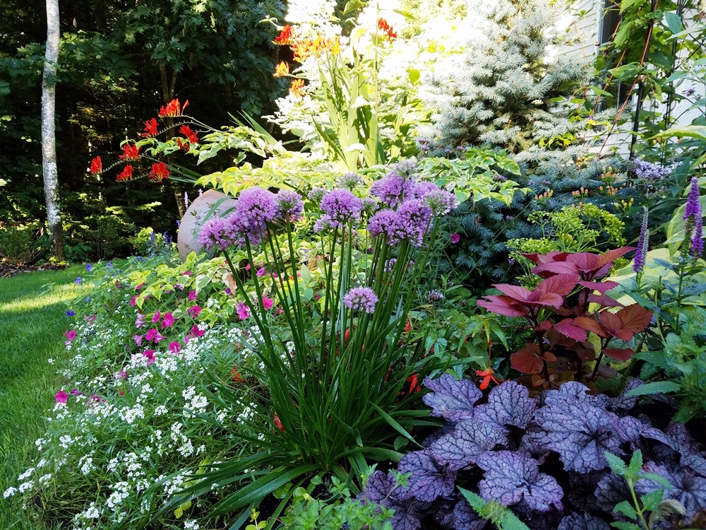 webinars for exceptional plants and garden design tips - Garden Design Kerry