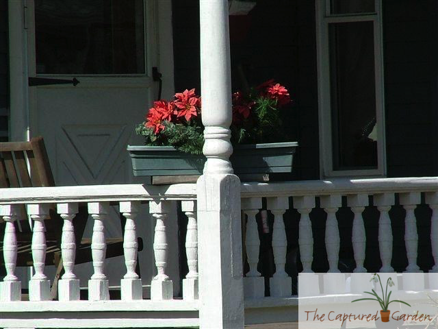 porch container garden