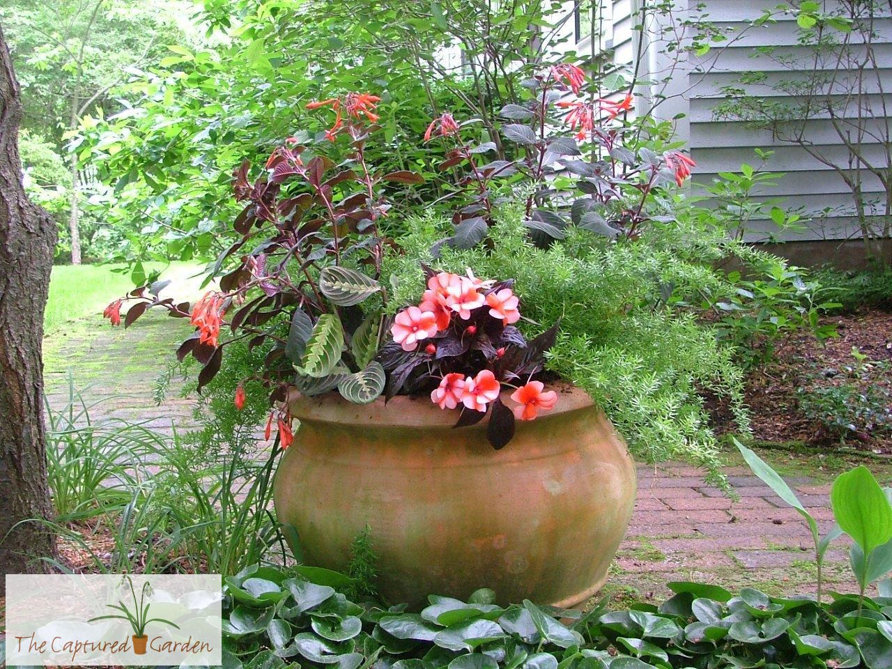 Container Garden Design 4 complement your yard ensure your container garden designs Houseplant Container Garden Design Services