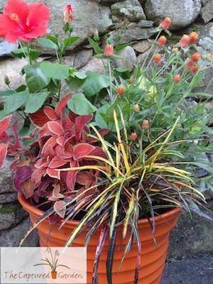 houseplant container garden design services
