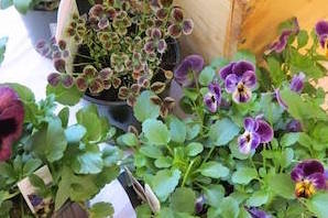 container-garden-lecture-series-wareham-ma-2b