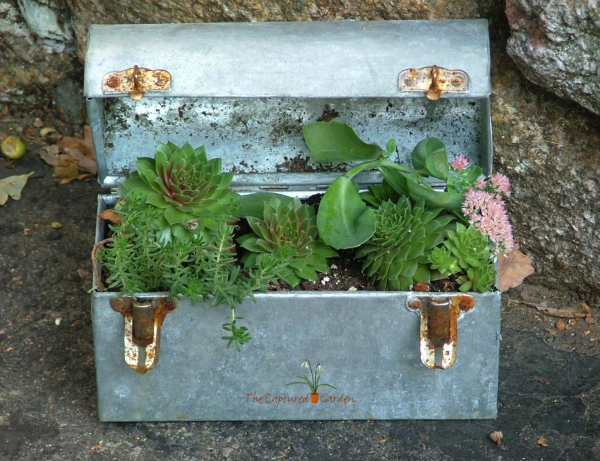 container-garden-lunch-box-succulents
