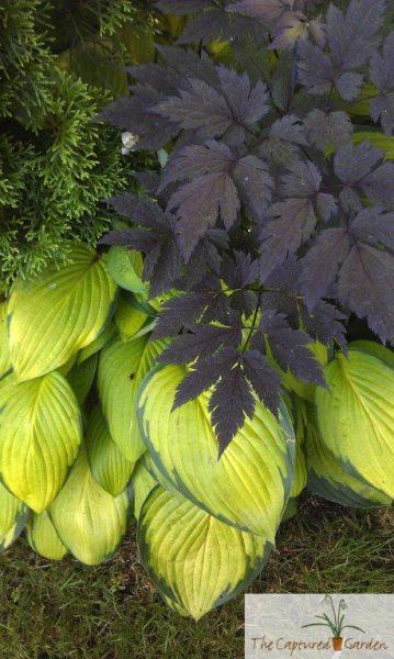 foliage-colors-container-garden-design-529
