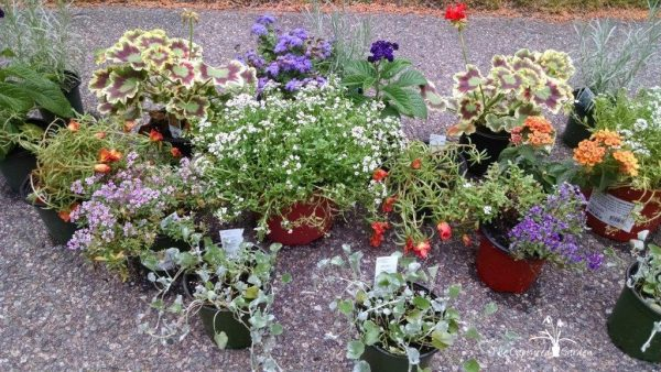 container garden selection