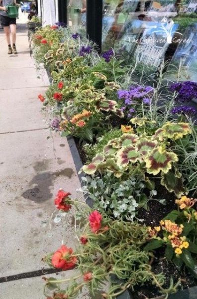 container-garden-window-box-array-2