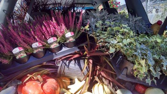 custom garden design services - plant materials