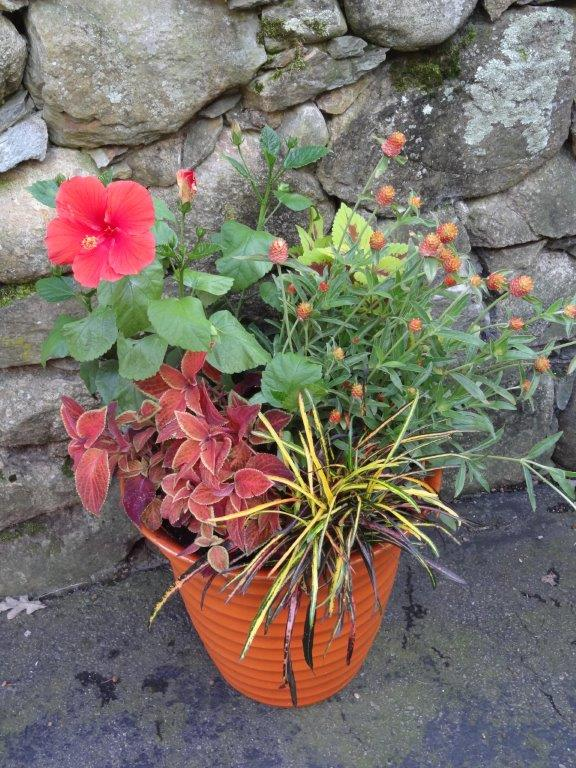 container garden lectures, speaker - deborah trickett