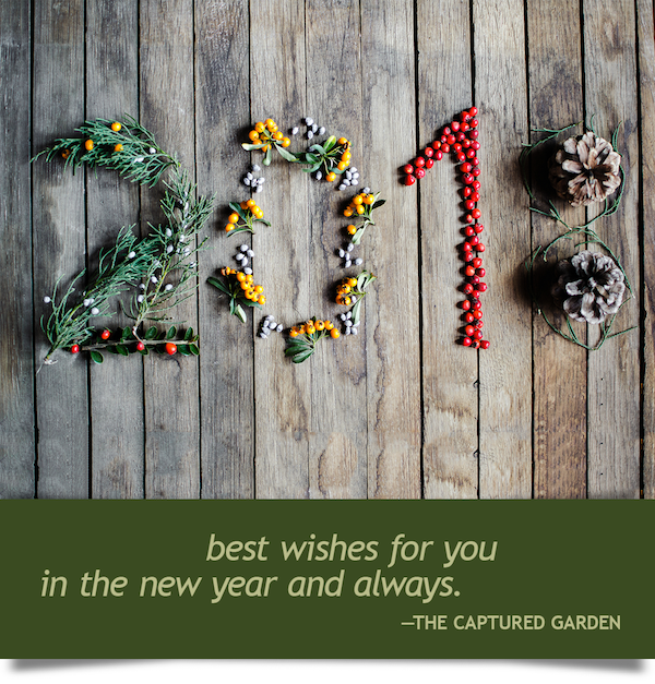 happy new year from the garden
