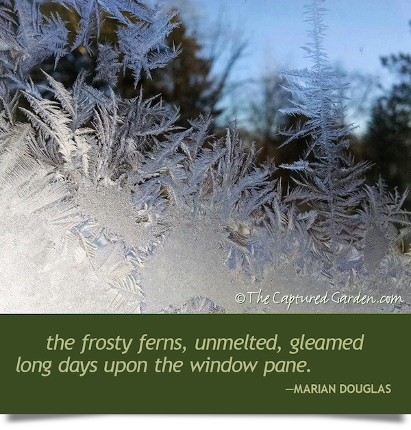 frosty ferns, unmelted, gleamed long days upon the windowpane