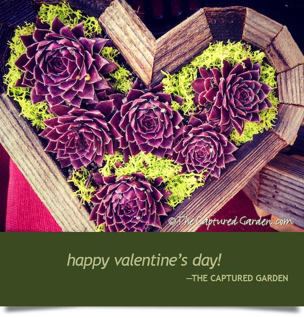garden-valentine
