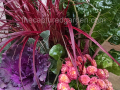 ornamental-grass-swiss-chard-and-cabbage
