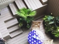 basement-apartment-patio-foliage-texture-greens