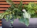 dramatic-foliage-planter-ferns-caladium-variegated-ginger