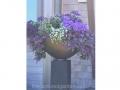 elegant-contemporary-purple-flowers-ajuga-ageratum