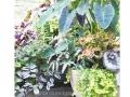 foliage-container-begonia-alocasia-coleus-fern