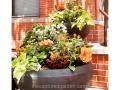 hot-colors-container-orange-hibiscus-croton-sweet-potato-vine