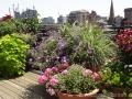 roof-garden-geranium-perennials-coleus-boston