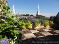 roof-garden-hydrangea-nepata