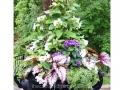 shady-urn-begonia-fern-impatiens-thunbergia