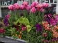 spring-windowbox-tulip-nemesia-lettuce-daffodils