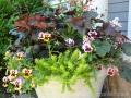 summer-container-garden-heucherasedum-pansy