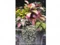 tropical-foliage-container-caladium-fern-coleus