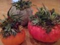 Succulent Pumpkin Container Garden Workshop