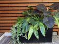 midcentury-modern-planter-with-foliage-ferns-greens-watermarked