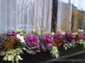 Windowbox-with-cabbage-and-mums