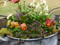 spring-container-ranuncula-daffodil-moss-pansy