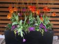 spring-planter-box-contemporary-tulips-orange-purple
