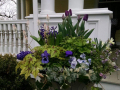 spring-urn-with-tulips