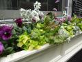 spring-windowbox