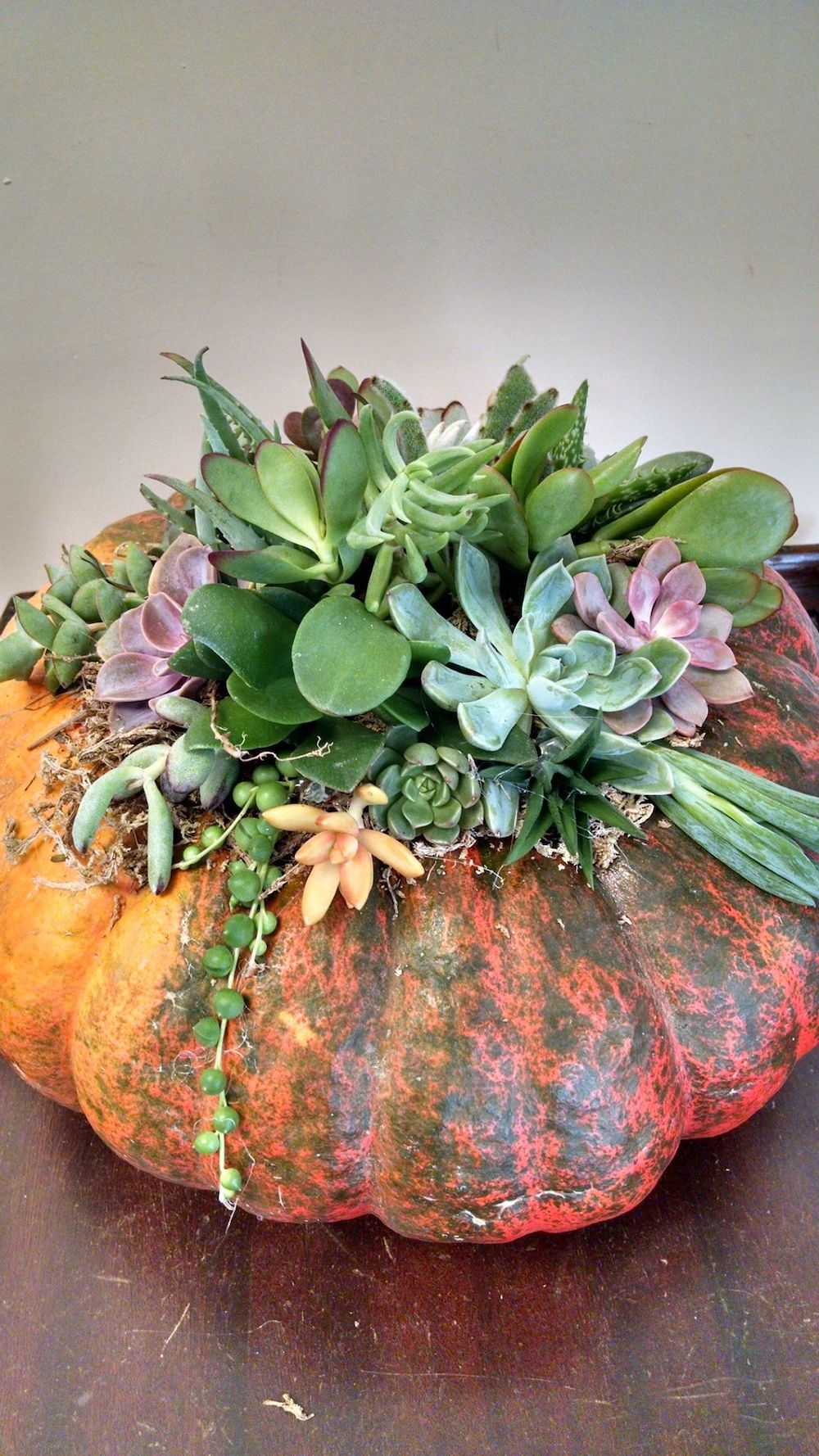 Pumpkin Centerpieces Succulents Workshop