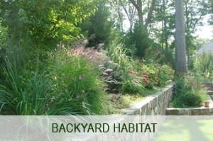 backyard-habitat-image