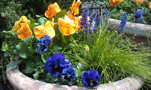 container gardening with purple and yellow