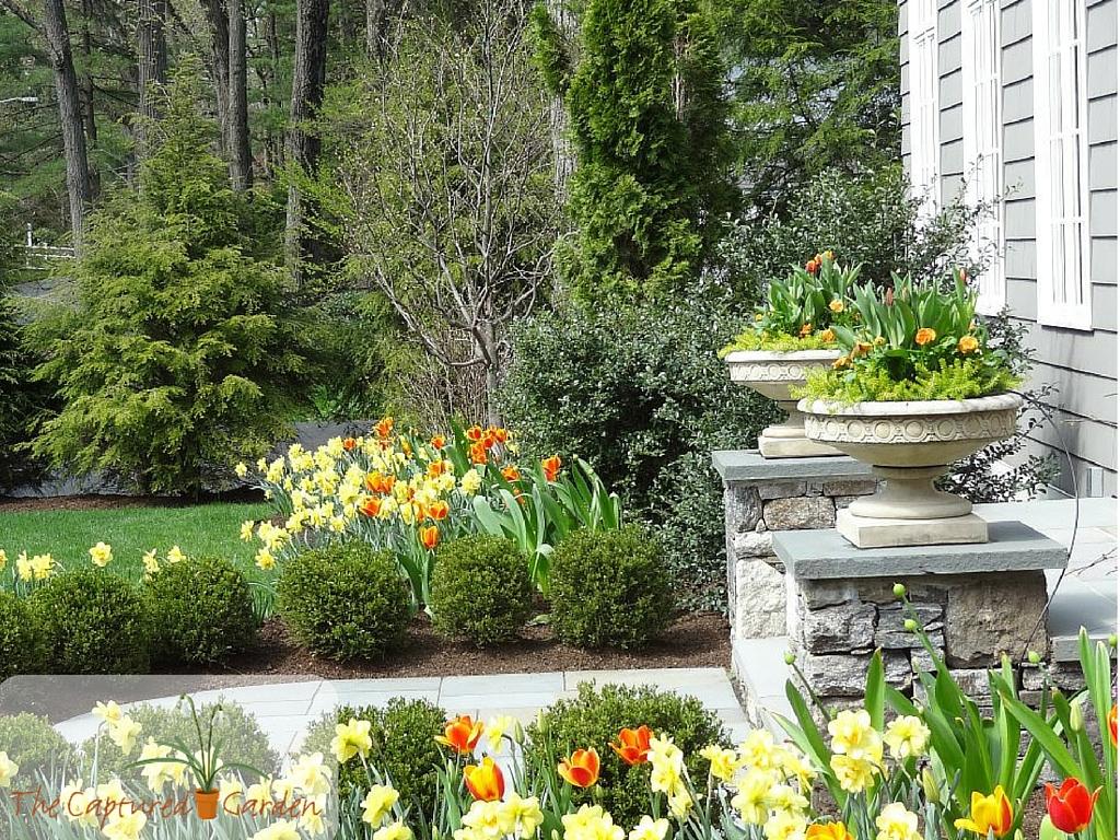 container-gardening-orange3