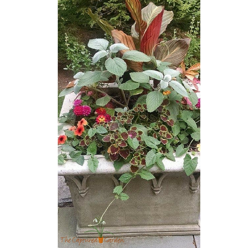 customized container garden design