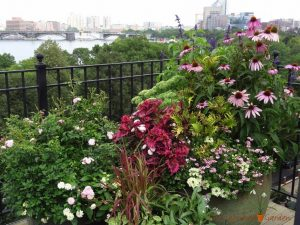 rooftop garden boston